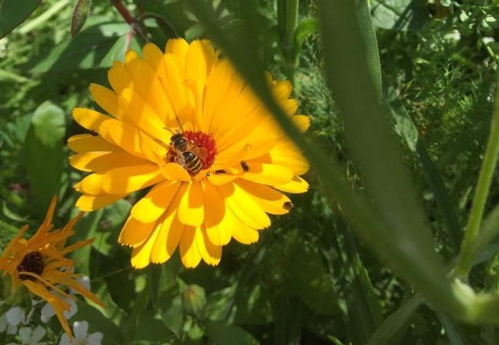 Honig wird gesammelt