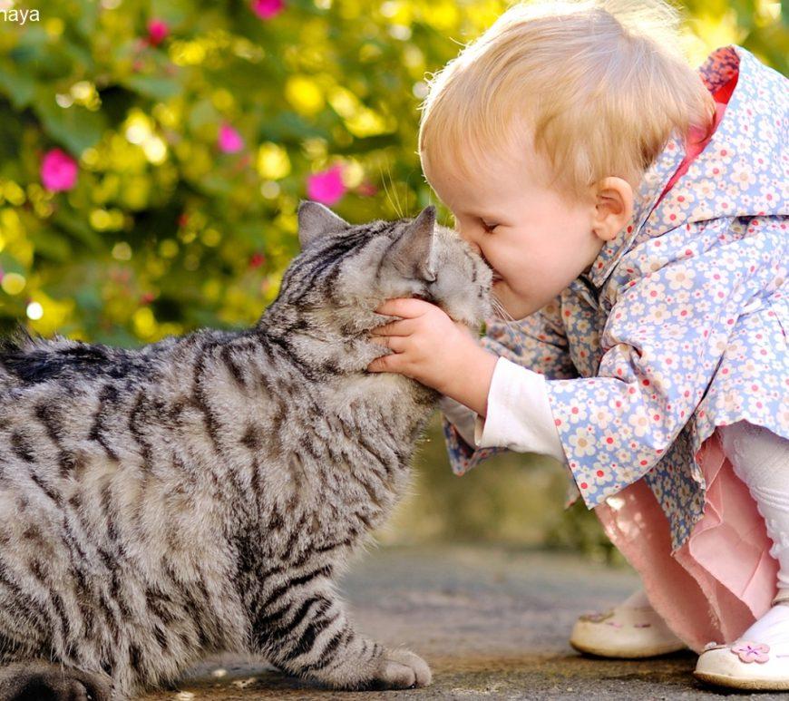 Hund, Katze und Co – die Suche nach dem perfekten Haustier für Kinder