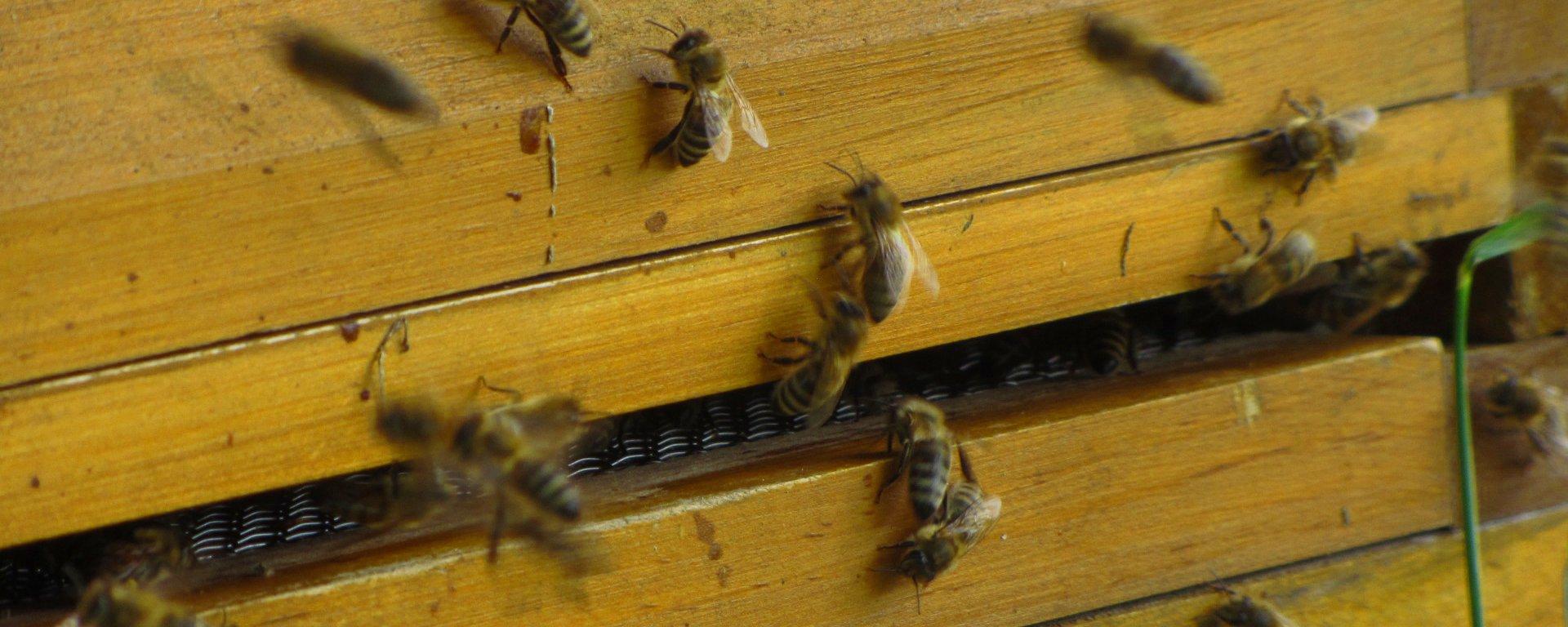 Honig als natürliches Lebensmittel