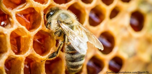 Propolis - Ein geheimnisvoller Stoff hilft Biene und Mensch