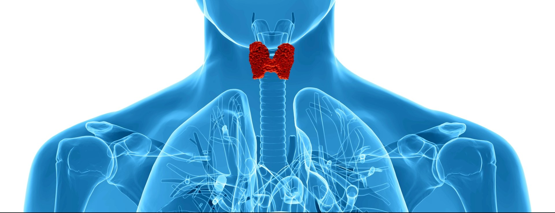Wissenswertes über die Schilddrüsenunterfunktion